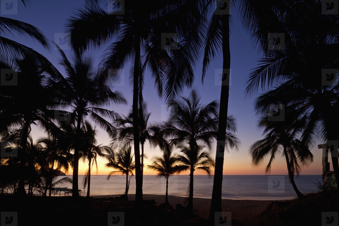 Tranquil  idyllic tropical ocean beach with palm trees at sunset  Sayulita  Nayarit  Mexico