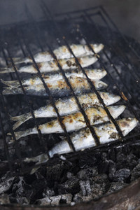 Whole sardines cooking on barbecue grill 01