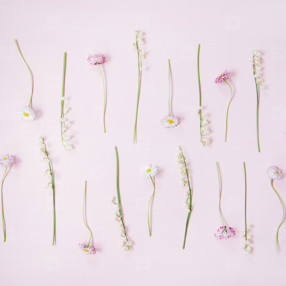 Flat lay of lily of the valley and daisy flowers over pastel pink background  square crop