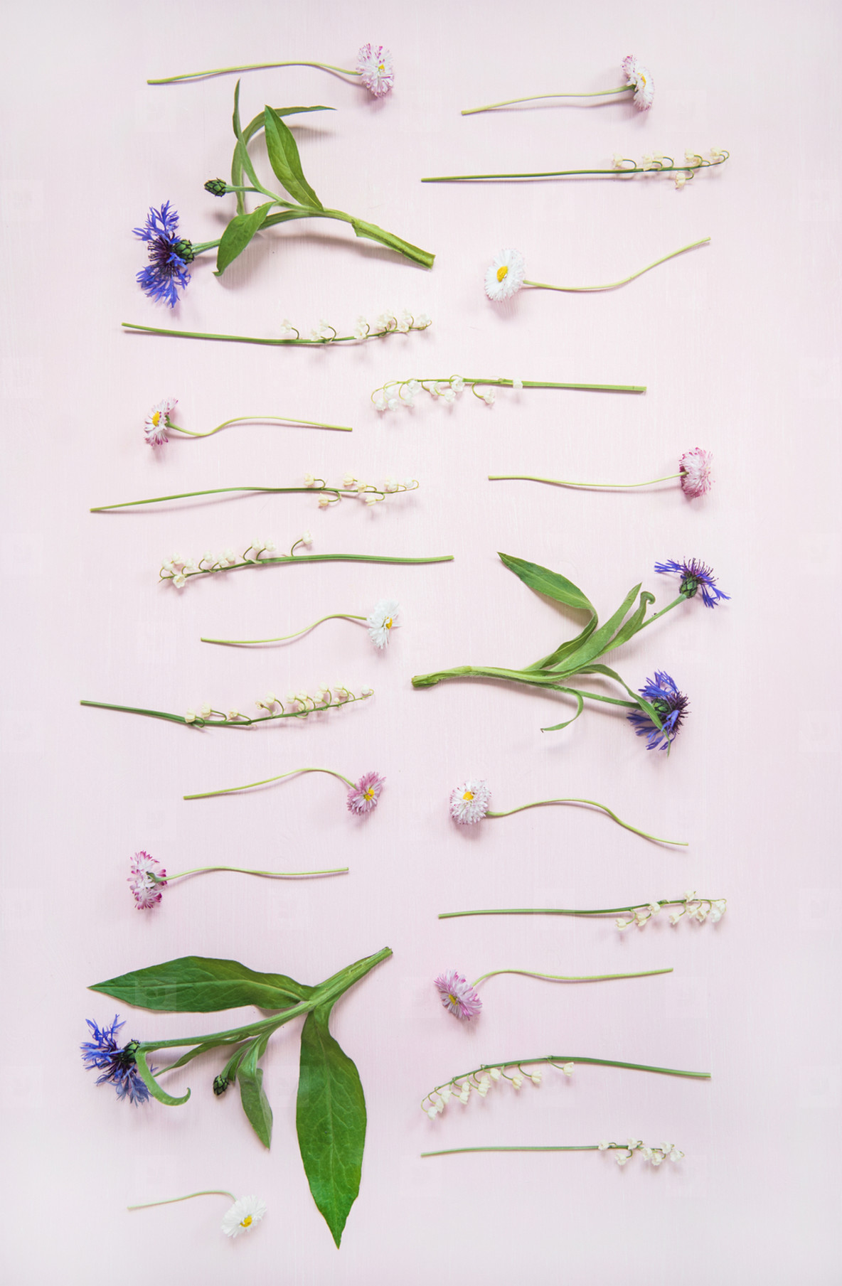 Flat lay of lily of the valley  cornflower  daisy and peony garden flowers in rows  vertical composition