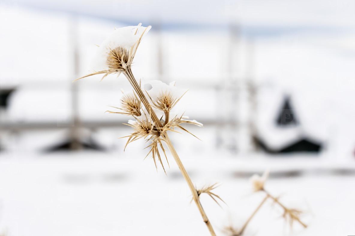 Snowed plants in ski resort of Sierra Nevada