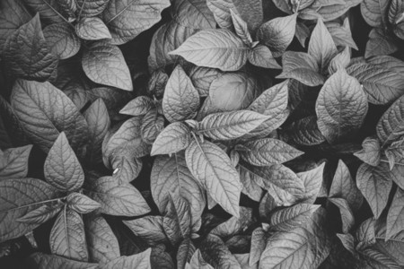 Top view of plants  Nature full frame background  Black and white photography