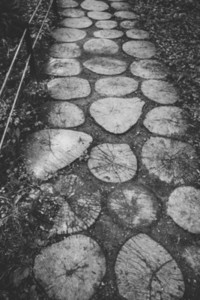 Wooden walkway to the garden Black and white moody photography