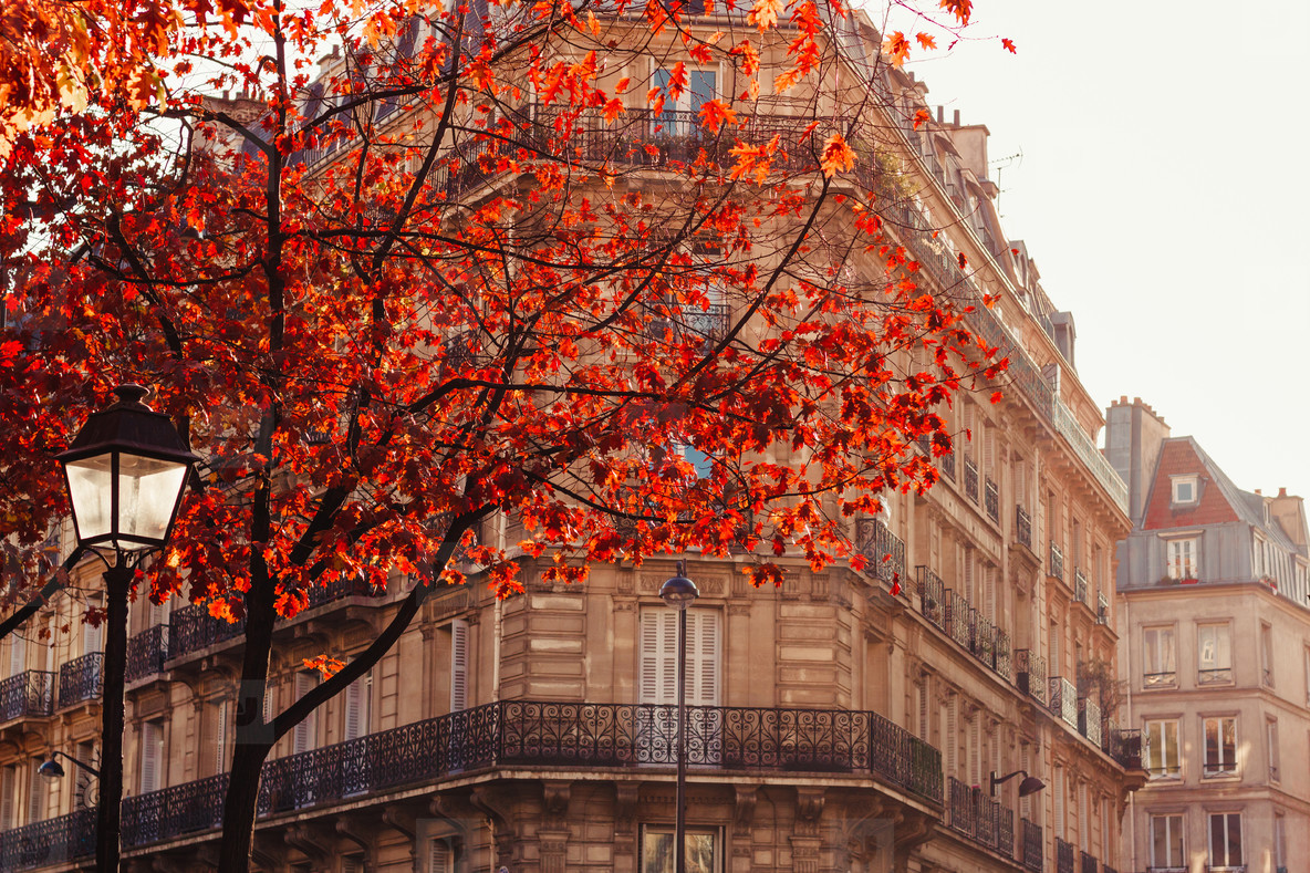 View through orange foliage on a house in Paris  France  The concept of Autumn time and October