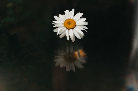 Abstract Daisy