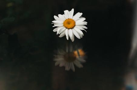Abstract Daisy