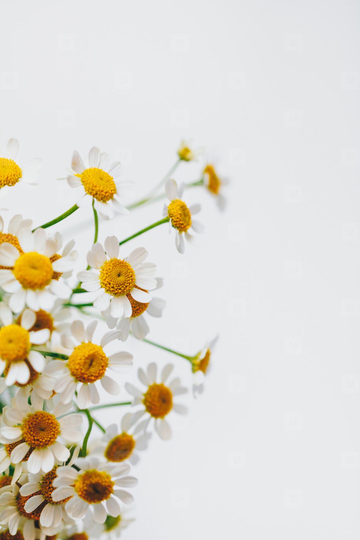 Little daisy flowers bouquet over white  Soft focus  top view  close up composition  Copy space