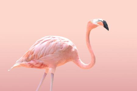 Flamingo 05