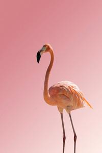 Flamingo 06