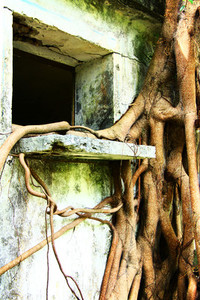 Window and wild roots