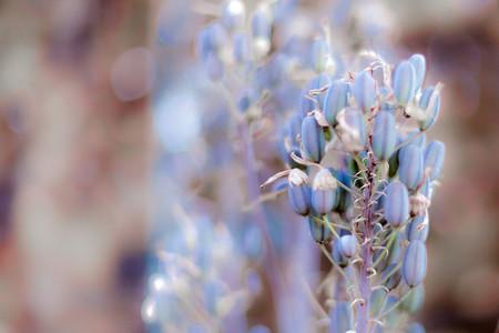 Macro shot of flower 01