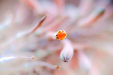 Macro shoot of flower 02
