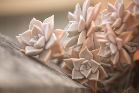Macro shoot of flower 05