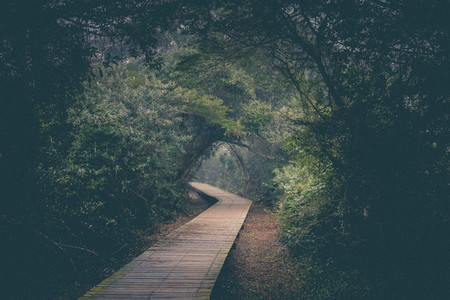Deep forest pathway
