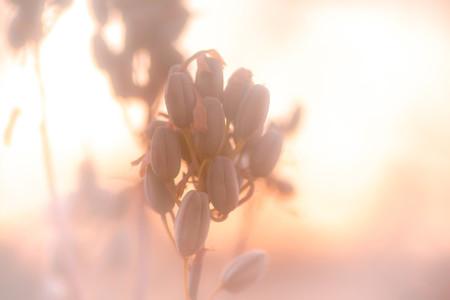 Macro shoot of flower 08