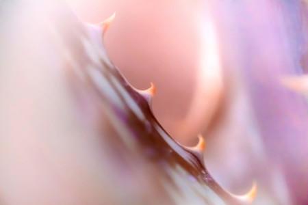 Macro shoot of flower 10