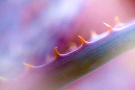 Macro shoot of flower 11