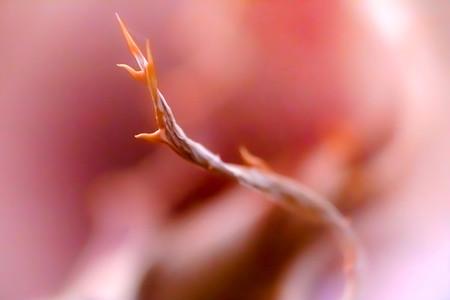 Macro shoot of flower 12