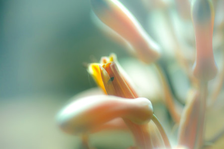 Macro shoot of flower 13