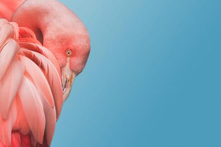 Flamingo 07