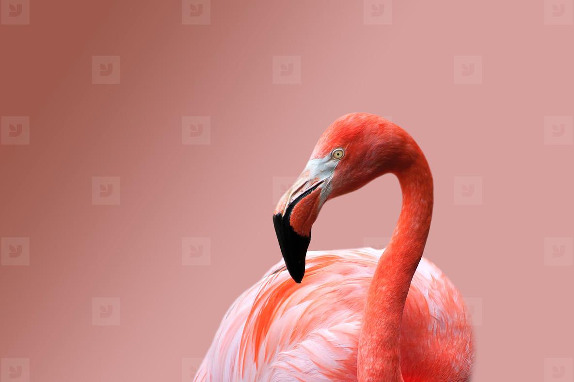 Flamingo 08