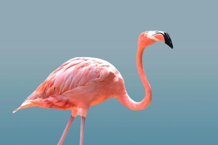 Flamingo 09