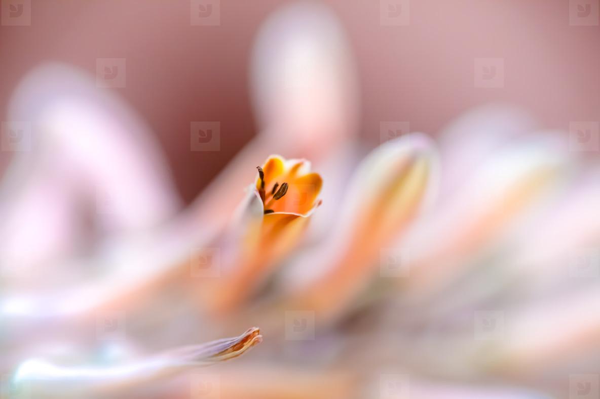 Macro shoot of flower 15