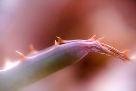 Macro shoot of flower 17