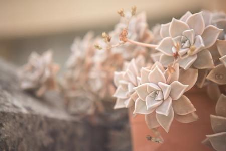 Macro shoot of flower 19