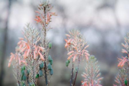 Macro shoot of flower 20