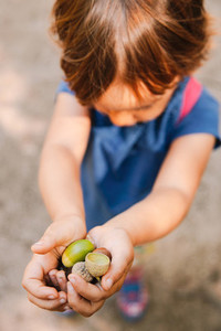 Close Up Of A Young Girls Hands Holding A Pile Of Acorns