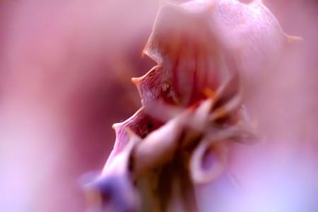 Macro shoot of flower 23