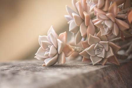 Macro shoot of flower 24