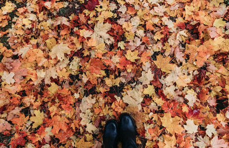 Top view of the fallen maple leaves on the ground and boots Autumn orange background