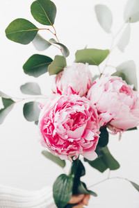 Girls hand holds beautiful pink peonies bouquet over white wall The concept of celebration and present
