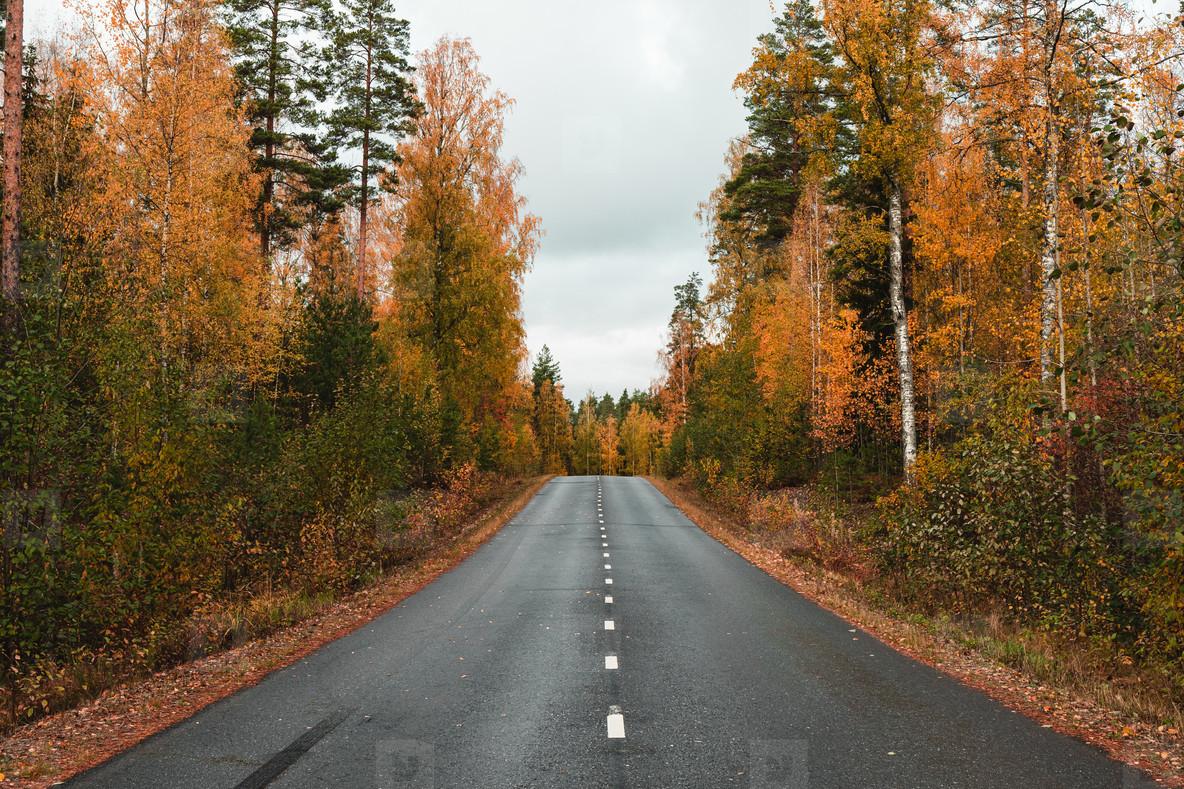 Beautiful scene of highway through Autumn forest