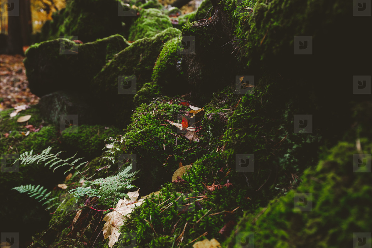 Macro photography of green moss on stones in a northern forest  Nature background
