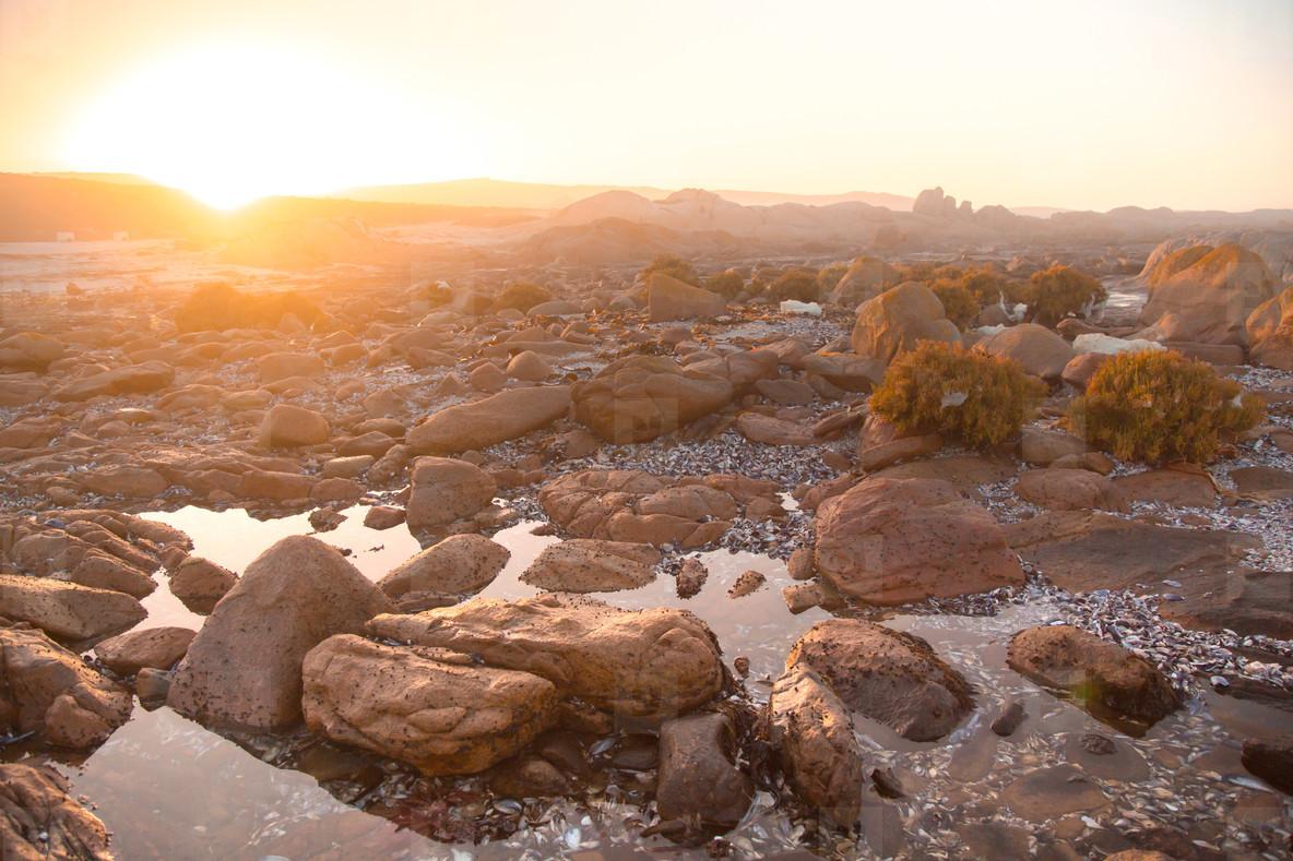 Cape Columbine  South Africa 4
