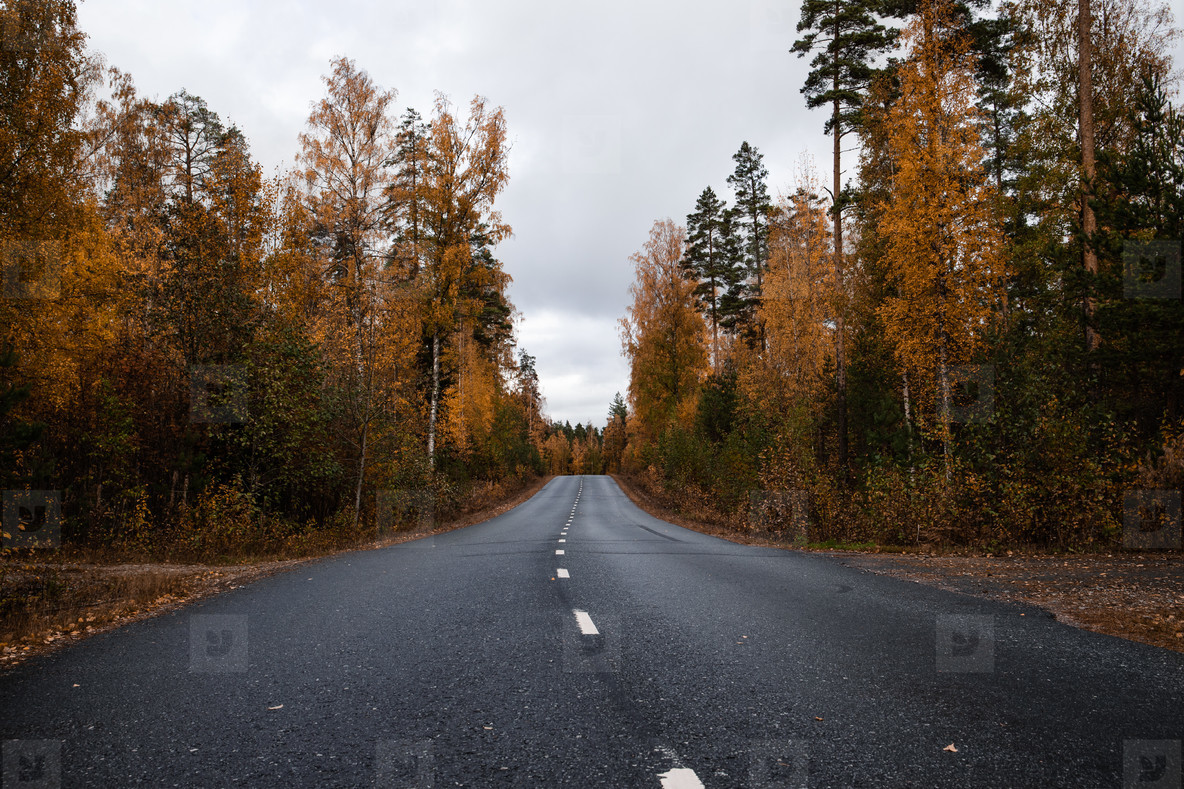 Beautiful moody scene of highway through Autumn forest