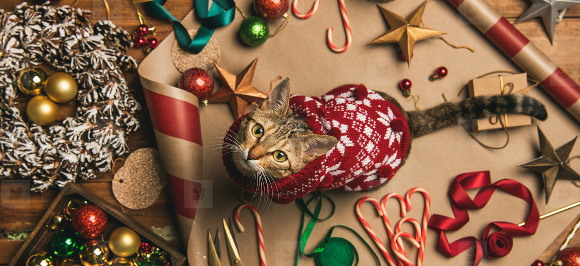 Flat lay of Christmas decorations and cat in sweater  wide composition