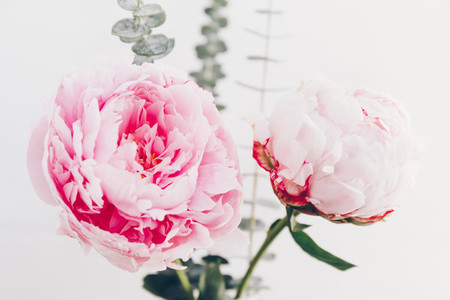 Beautiful bouquet from pink peonies  The concept of celebration and love  Copy space