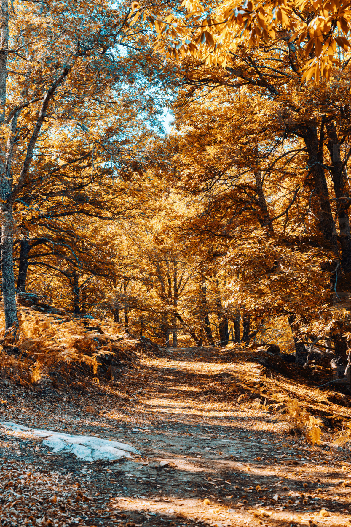 Path in autumn chestnut forest in Spain with warm colors