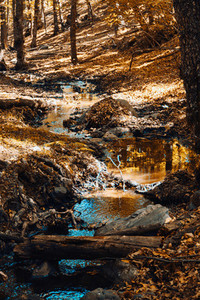 Creek in autumn chestnut forest in Spain with warm colors