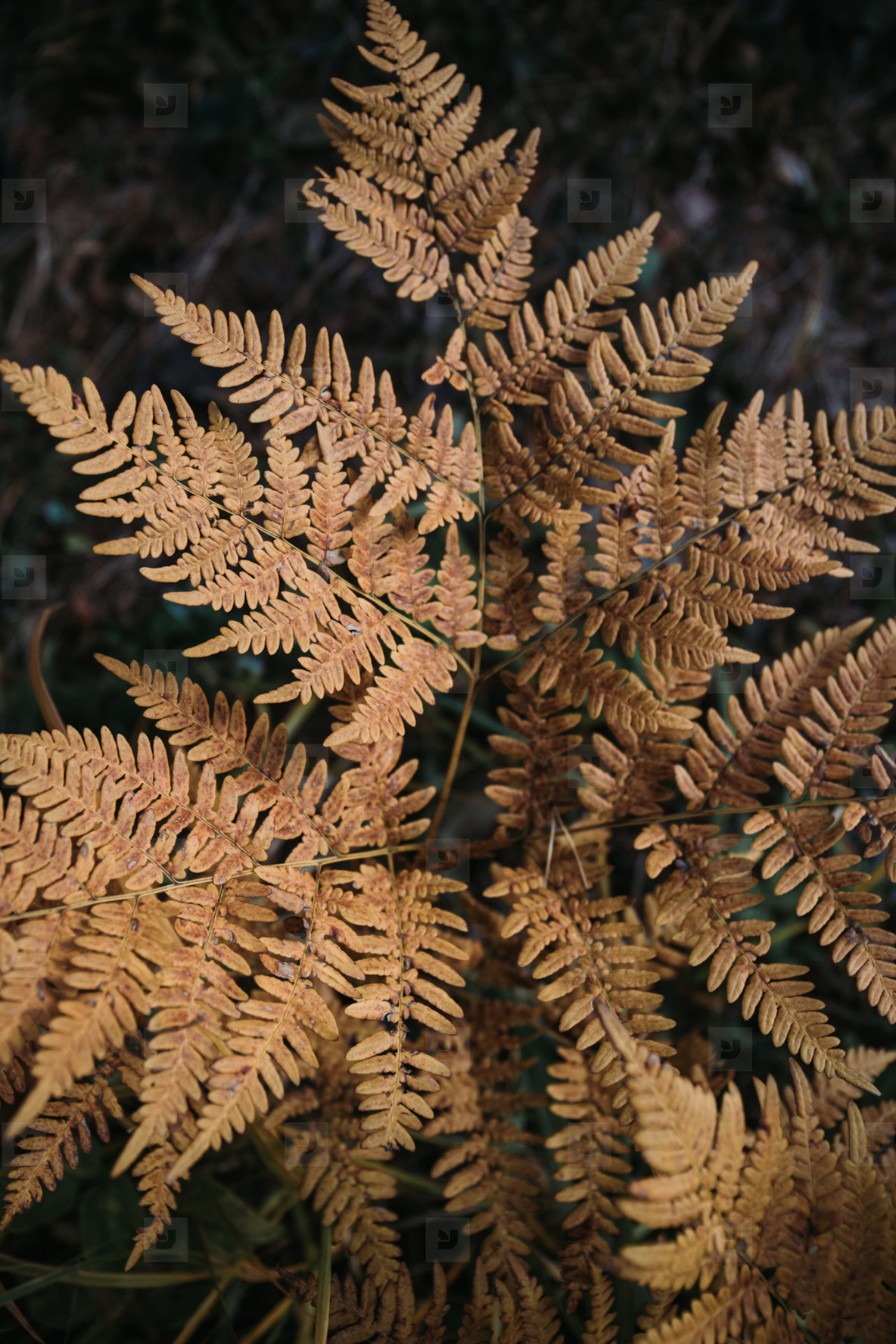 Fern branch with orange foliage in Autumn forest  Nature frame  macro photography