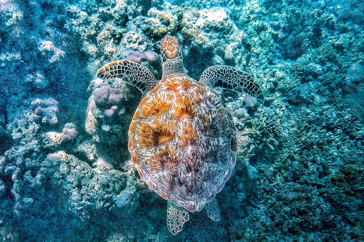 Turtles found on Gili Islands
