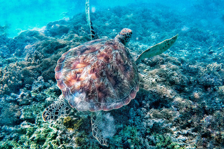 Turtle found on Gili Island