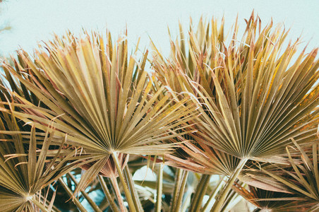 Desert Plants 9