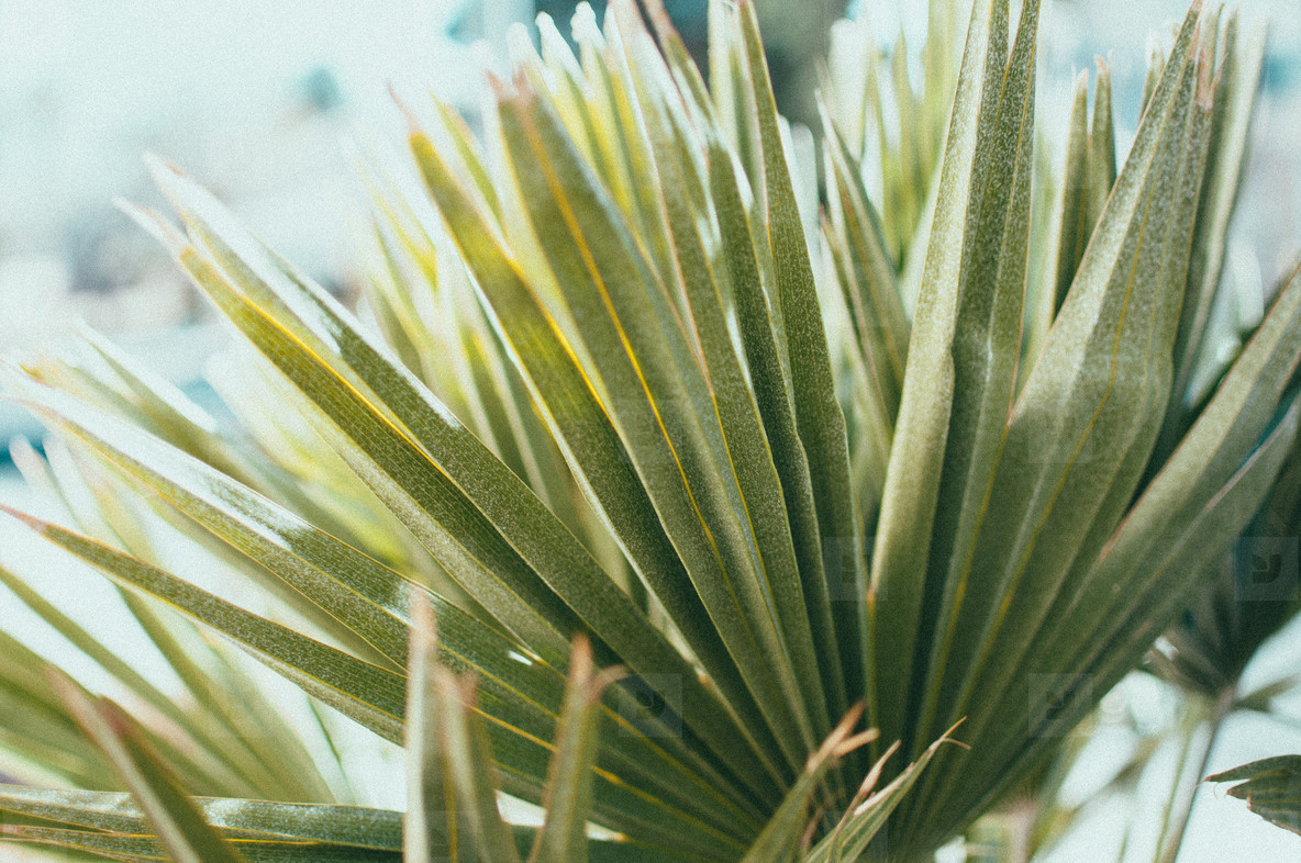 Desert Plants 7