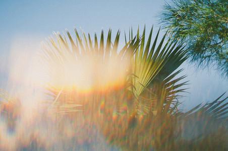 Desert Plants 6