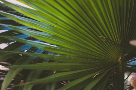 Desert Plants 4